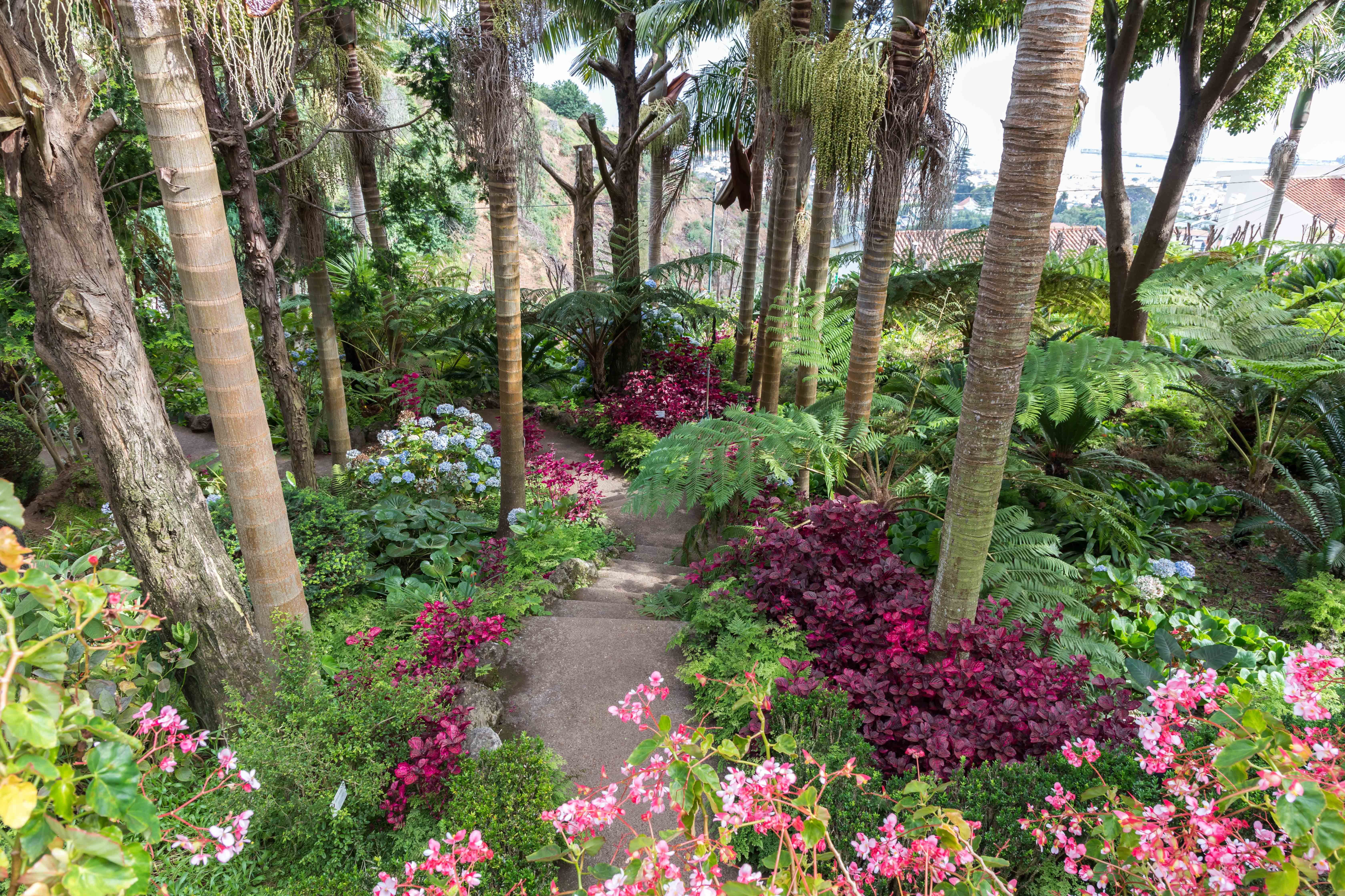 LE JARDIN TROPICAL MONTE PALACE MADEIRA